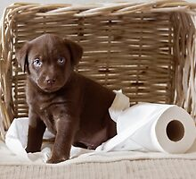 Chocolate Lab by AndreaBorden