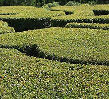 Topiary by mrivserg
