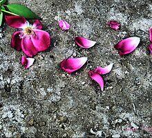 Fallen Beauty IV by Suni Pruett