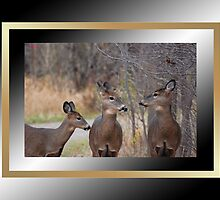 """We Must Talk!"" :) (framed for wall art/prints) by TerriRiver"