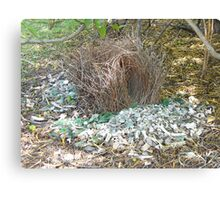 Bower Bird Nest Canvas Print