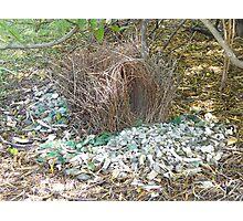 Bower Bird Nest Photographic Print
