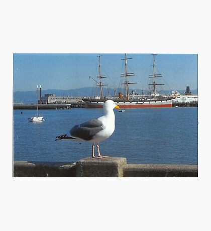 The Seagull Looks Out To The Sea Photographic Print