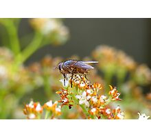 Fly 2 Photographic Print
