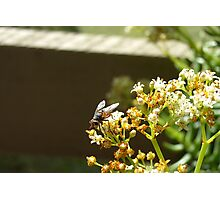 Fly 3 Photographic Print