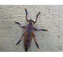 Bug on a wall Photographic Print