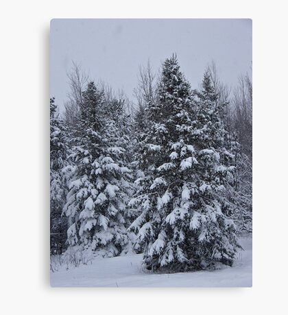 Winter Wonderland Canvas Print