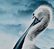 Portrait of a pelican by Jeff Davies