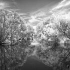 Tree Reflections by Ladyshark
