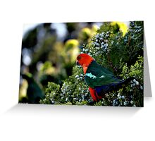 Parrot.. Our regular visitor. Greeting Card