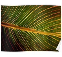 Backlit Leaf Poster