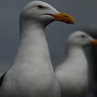 Twin Seagulls by CarloDC