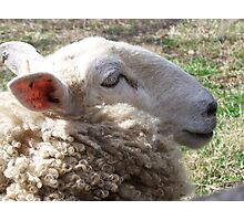 hey ewe! Photographic Print