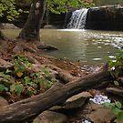 Richland Creek Waterfall by Dawne Olson