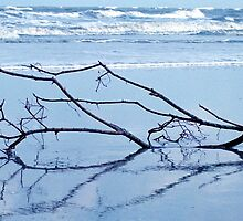 Drifted Ashore by Julie's Camera Creations <><