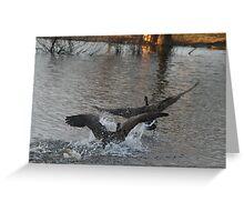 Geese Tag Greeting Card