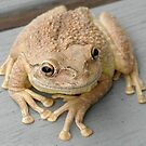 Cuban Tree Frog by Terry Best