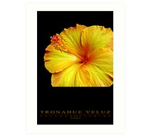 Hibiscus - Flower Series Art Print