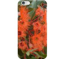 Red Gum in the street iPhone Case/Skin