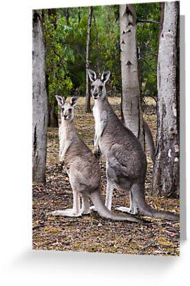 Kangaroos by Helen Green