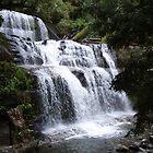 Liffey Falls, Tasmania by gaylene