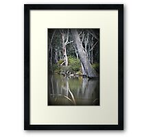 Ready to Fall, Old trees at Gunbower Framed Print