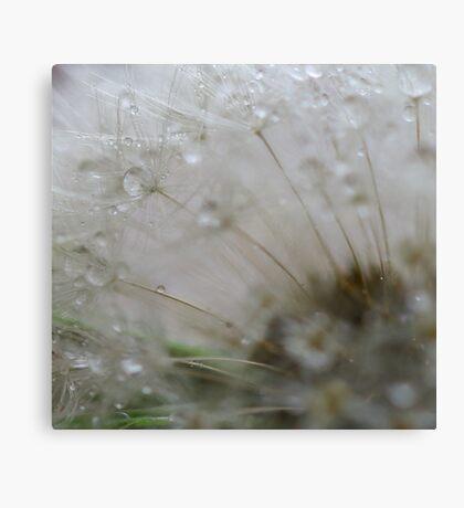 Dandelion close up Canvas Print