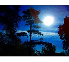 Tree In Shadow Photographic Print