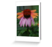 Coneflowers Greeting Card