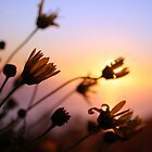 Wildflower Sunset by louishiemstra