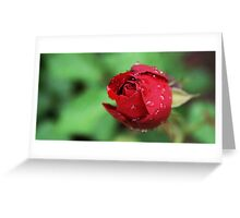Raindrops on Roses, Salzburg Greeting Card