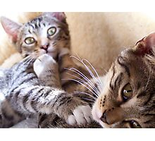 Playful kittens 02 Photographic Print