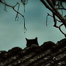 { black cat } by Louise LeGresley