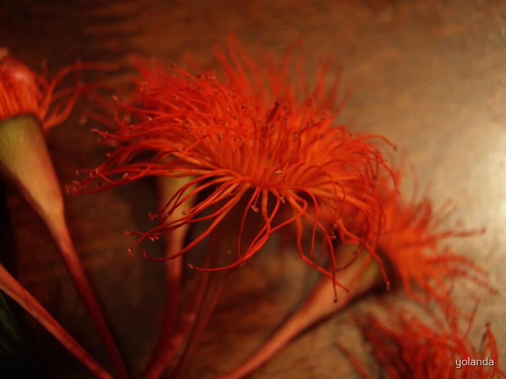 Burnt Orange by yolanda