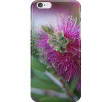 Pink Bottlebrush iPhone Case/Skin