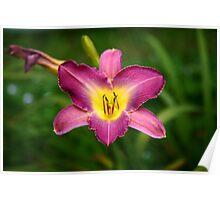 Ravenshoe Lily Poster