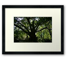 Middle Earth Tree, Ravenshoe Framed Print