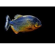 Piranha Beauty Photographic Print