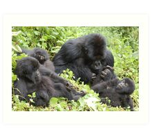 Gorillas in Our Midst Art Print
