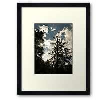 Magestic Pines Framed Print