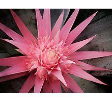 pink furry Photographic Print