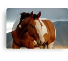 Horse Near Spanish Fork Utah Canvas Print