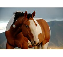 Horse Near Spanish Fork Utah Photographic Print
