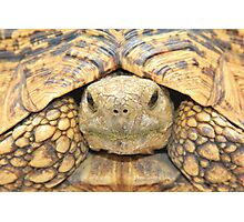 Tortoise Stare - Serious Intimidation of Fun Photographic Print