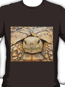Tortoise Stare - Serious Intimidation of Fun T-Shirt