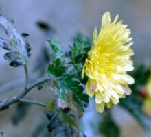 Chrysanthemum losing hope Sticker