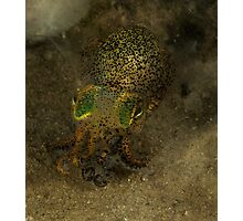Bobtail Squid, Gold Coast Seaway, Queensland, Australia Photographic Print