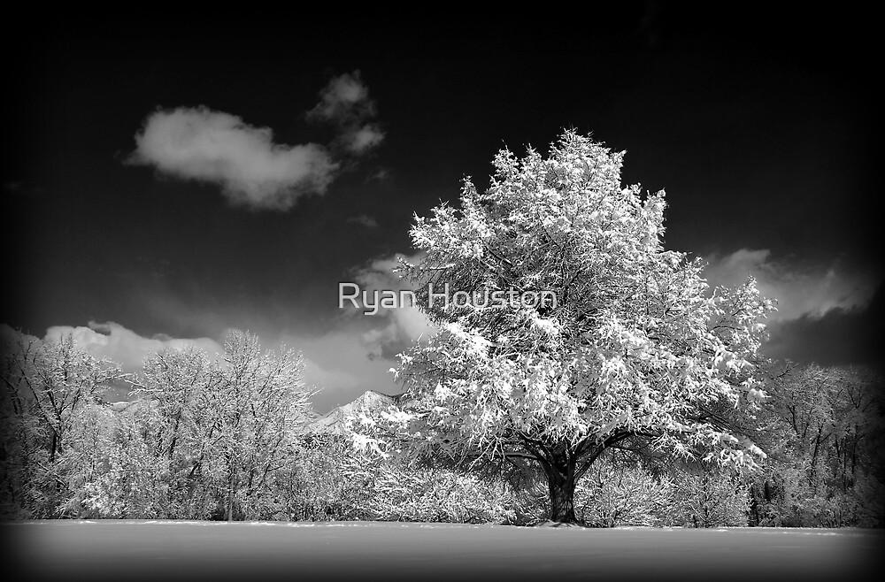 Black and White Winter Wonderland  by Ryan Houston