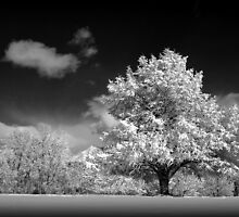 Black and White Winter Wonderland  by Ryan Houston