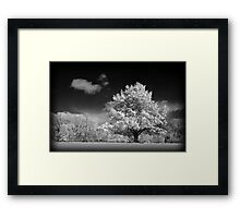 Black and White Winter Wonderland  Framed Print